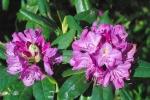 Parc-Jolimont-fleurs-Esteves.jpg