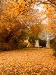 SAP-antenne-radio-automne.jpg